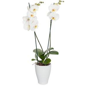 orchidee met pot